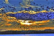 2011 Virginia Vistas Photo Contest Winners