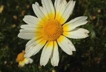 En el campo - In the field / El campo de Ibiza, sus flores y plantas, sus olores y sus verdes paisajes, inspiran cada una de nuestras fragancias.