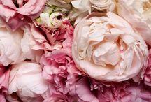 pretty things / by Hannah J