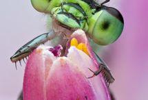 fantastici insetti