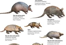Especies