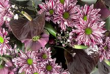 Chrysanthemum creations