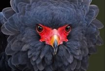 dünya kuş