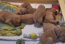 Unbearably Adorable Puppies / Name is pretty self explanatory- a major does of cuteness to help make your day a bit better.