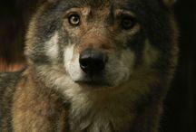 Animais / Fotos de animais selvagens e domésticos