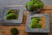 Jardim de musgo