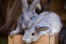 Buckshot the Bunny
