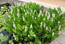 Białe kwiaty - white flowers
