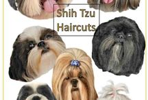 Shih Tzu Care tips / Mommy of two, I have found a few thinks to share.