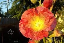 favorite flowers / by Debbie Sawchuk