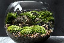 tarrerium mini bahçe