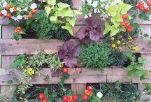 Gardening / by Fran Hauser