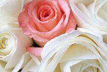 Rosas hermosìsimas