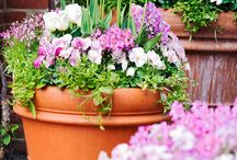 Flowers and gorgeous pots