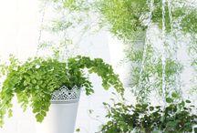 Plant ideeën voor binnen