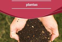 Compostagem e fertilizantes