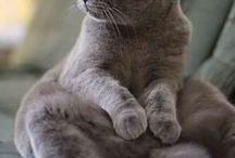 Kedi yavruları