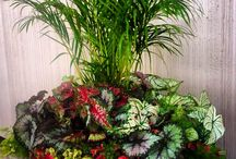 Container Gardening / Creative and colorful containers