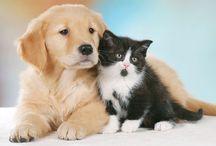 Umica Pets