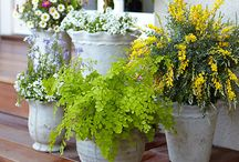 Garden Ideas / by Marsha Waldrop Early