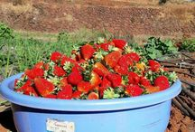 Laxmi Strawberry Farm / LaxmiStrawberry Farm is situated in the heart of Strawberry Fields in Mahabaleshwar , Amidst the valley offering the most panoramic view.