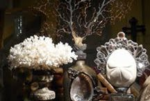 Coral, Shells, and Curiosities...