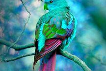Papegojor / Konst