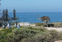 lutie katz beach home Yzerfontein