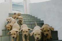 Cute Animal Overload / by Deborah Liebow