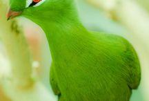 Birds!!!! / by Cynthia Tuttle