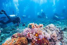 Unterwasserwelt und Tauchen