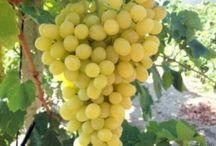 Meyveler / Fruits