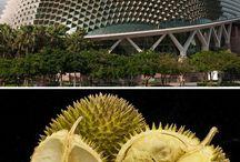 | biomimicry + design |