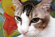 Jason / Cute cat