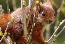 . squirrels .