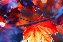 Красота мира / Осень, зима, весна, лето
