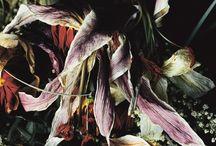 GRAPHIC_flowers / by Josep Cochran