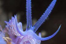 海の生物 / 海の中いろいろ