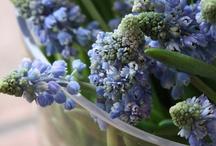 beautyfuly flowery