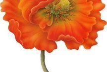 Цветы -цветочные - маки / Категория цветы