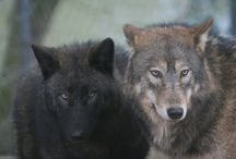 wolves / wolfstick