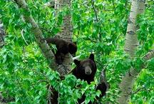 Bear / beertjess
