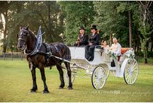 Wedding carriage / A classic Filipino transportation is called Calesa. In America, this is called Carriage.  I just want Calesa but I will take carriage as an alternative way of arrival to the wedding ceremony and reception to the barn.