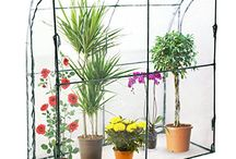 Balcony plants / Piante da balcone