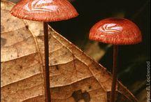 Mushrooms kingdom