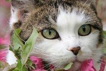 Feline Friends / Everything kitty!