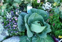 Garden edible landscaping
