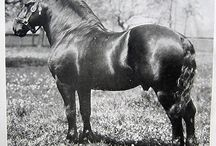 Historical Percheron Draft Horses / I love to collect all things old about Percherons. I have many magazines, books, articles and pieces at my disposal thanks to my mother.