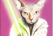 Carte anniversaire Pets Rock - star et animaux / http://lacarteriedeflavie.com/Cartes-Pets-Rock-Anniversaire-fete