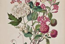 Ilustraciones Botánica